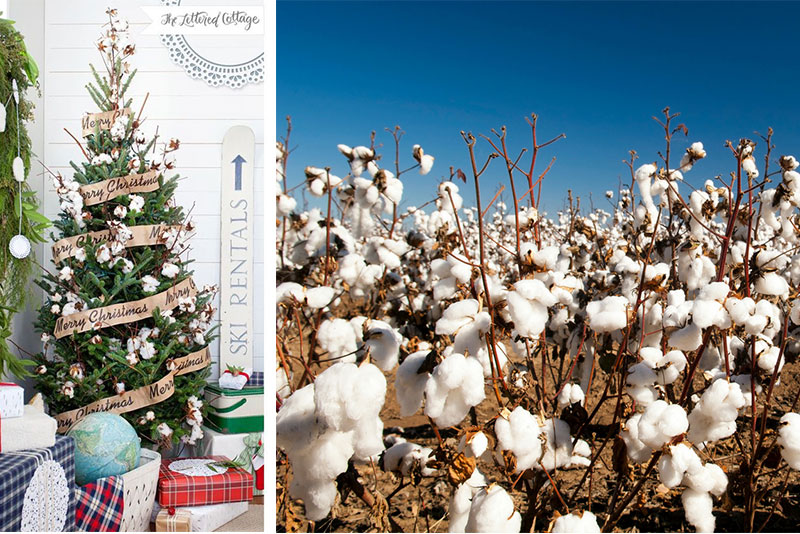 Cotton for the Holiday's